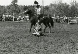 Calf roping at rodeo, 2 of 2, n.d.
