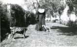 Franciscan sister with dogs, n.d.