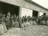 Boys by barn with full sacks, n.d.