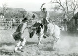 Bull riding at rodeo, n.d.