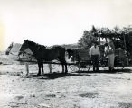 Horse-drawn wagon, n.d.