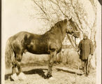 Brother Henry Billing, S.J., and horse, n.d.