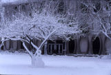 Snow covers the trees and ground outside Lalumiere Hall, 1997
