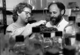 Two men examine plants in a biology lab, 1990