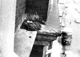 A bird's nest and eggs sit on a ledge on the Johnston Hall exterior, 1972-1973