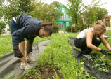 Marquette students pull weeds from a community garden, 2004