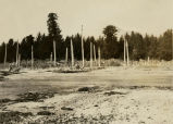 Totem poles at Port Tongass-Tongass Island, 1905 - 1928?