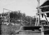 Fish drying on racks, 1928
