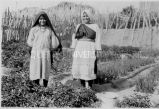 Girls in irrigated garden, n.d.